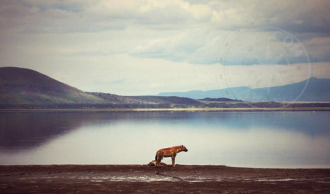 Просторы Кении - фото