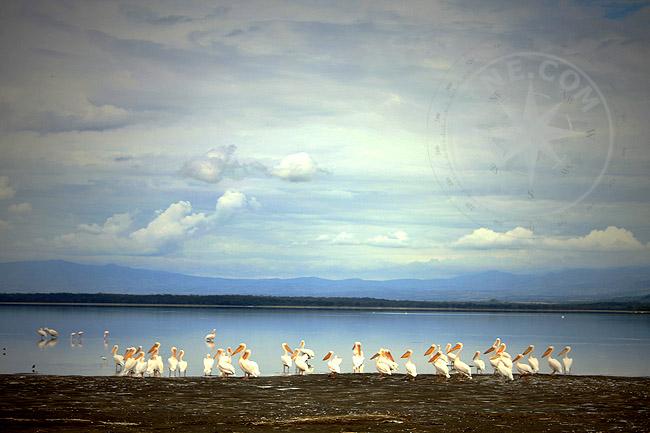 Птицы Кении - фото