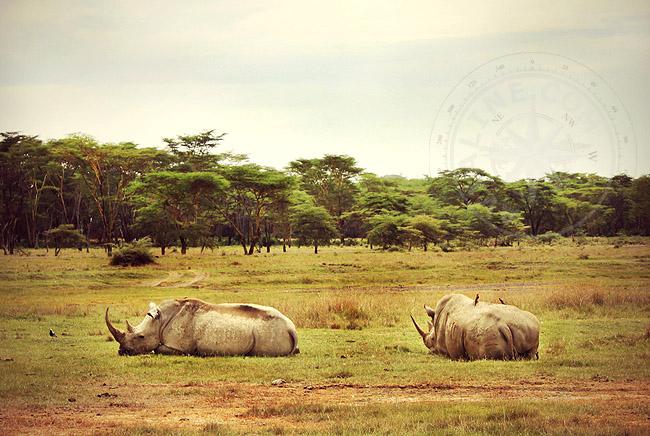 Носороги Кении - фото заповедника
