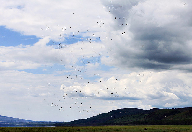 Кения - птицы - фото
