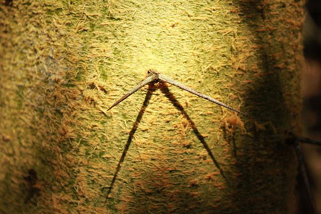 Масаи Мара - национальный парк - растения