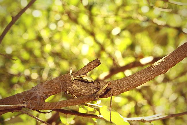 Деревья национального парка Масаи мара