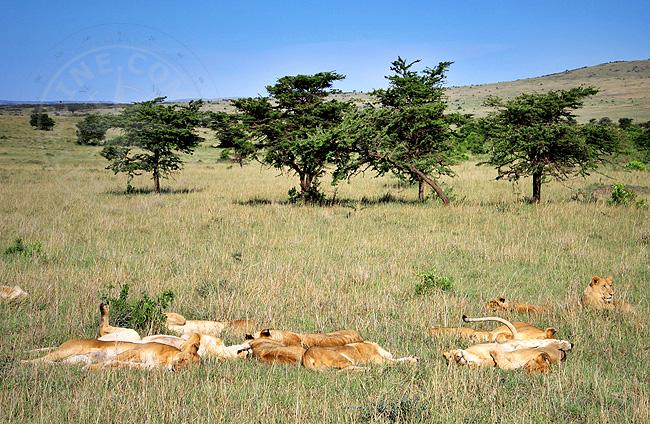 Отдых животных - Кения