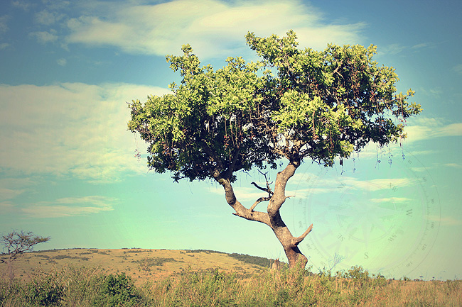 Деревья в Кении - фото