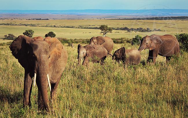 Национальный парк - сафари по заповеднику
