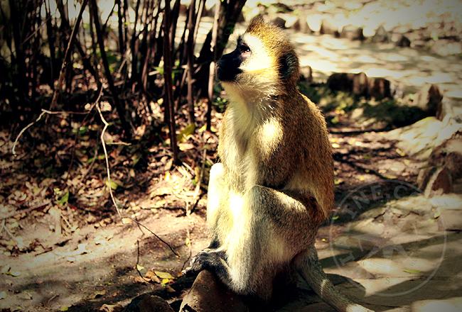 Задумчивая обезьяна - фото
