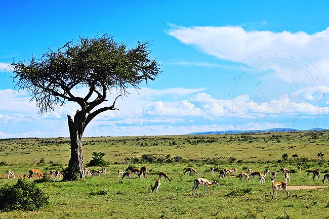Саванны Африки - фото национального парка