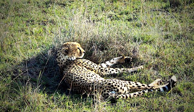Кения - фото животных