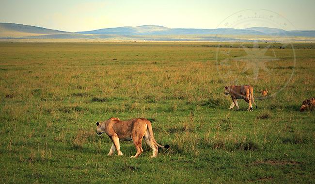 Сафари по Кении - фото