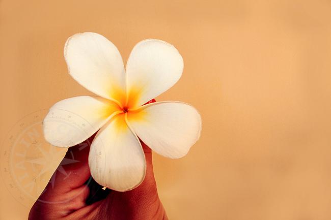 Цветы острова Занзибар - фото