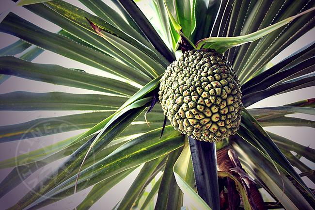 Экзотические фрукты - Танзания