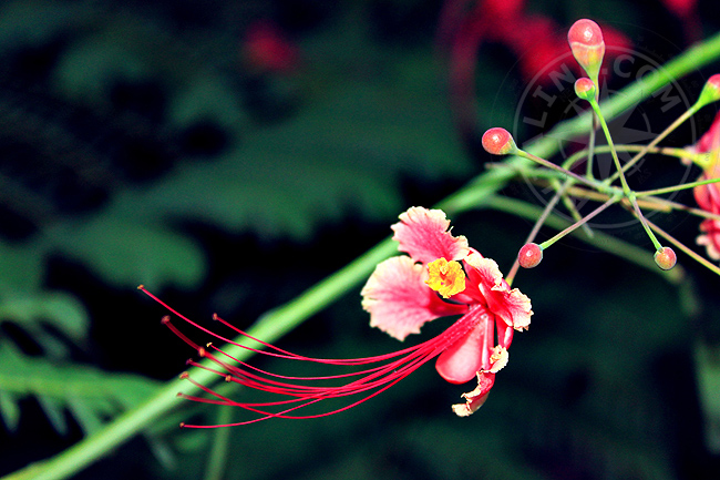 Экзотические растения и цветы - Занзибар