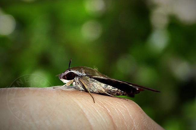 Танзания - насекомые - фото