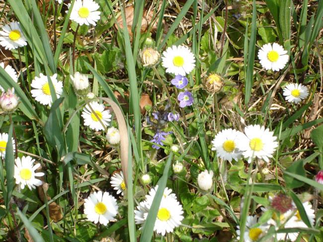 Бавария - Бад Райхенхаль - весенние цветы