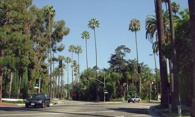 Beverly Hills - город звезд и миллионеров, известен пышными пейзажами. Бульвар с растущими пальмами.