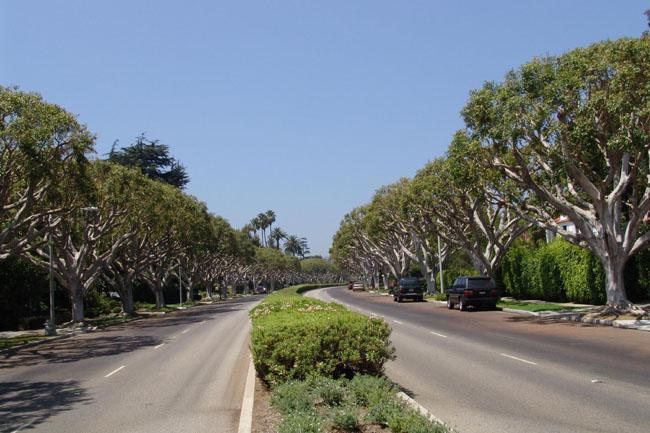 Beverly Hills - бульвар с платанами