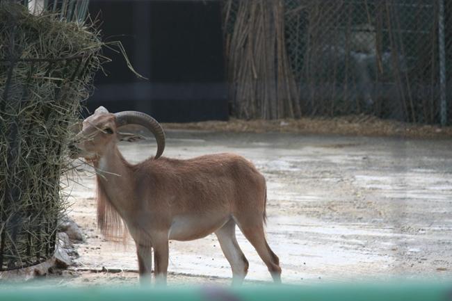 Дубайский зоопарк история животные зоопарка адрес и фото