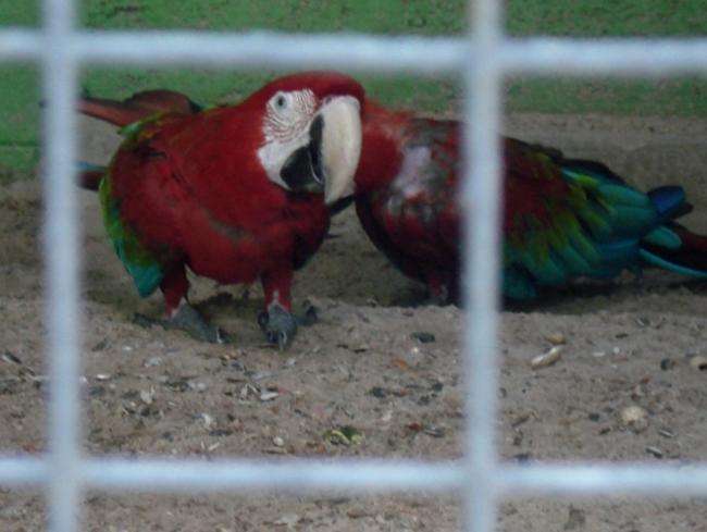 Зоопарк в Дубае ОАЭ отзывы фото цена время работы