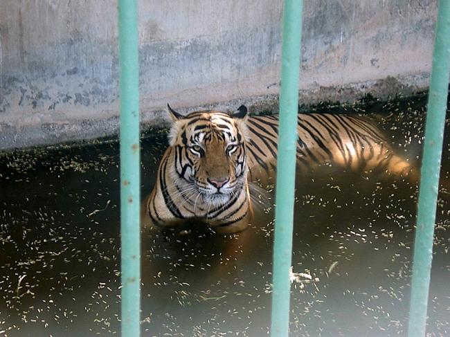 Дубайский зоопарк - фото