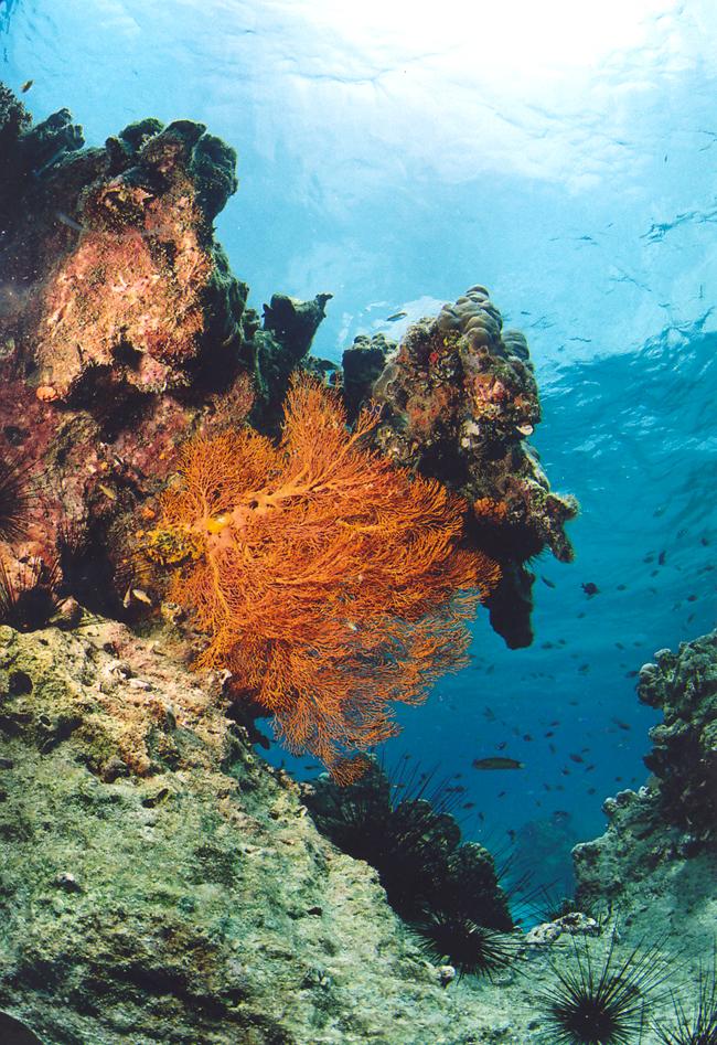 Дайвинг на острове Сипадан - фото flickr.com