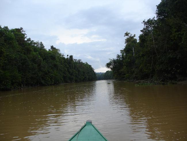 Река Кинабатанг - Малайзия - фото flickr.com