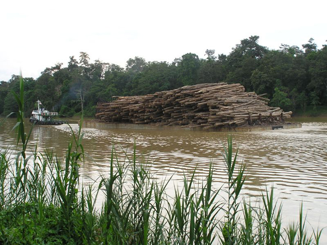 Kinabatang - река Кинабатанг - фото