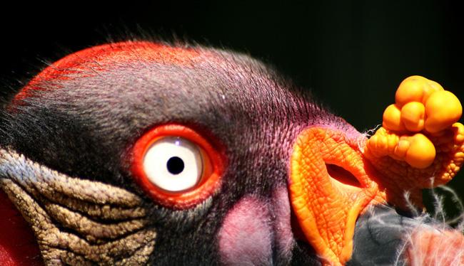 Берлинский зоопарк - Германия - фото flickr.com