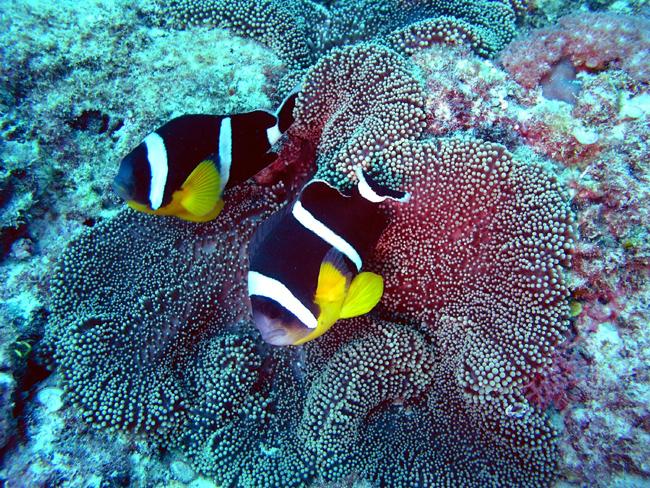 Маврикий - дайвинг - фото