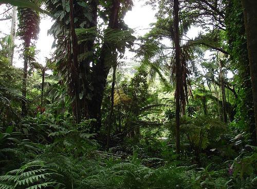 Гавайский тропический ботанический сад - фото
