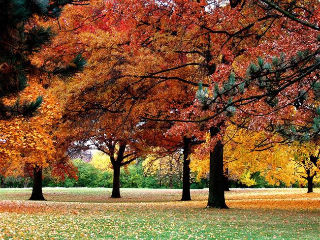 Иллинойс - осень - фото США