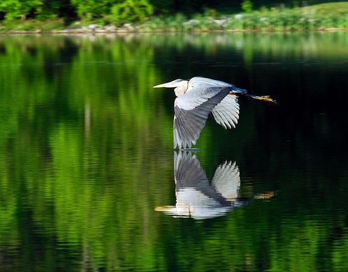 Штат Мэриленд - фото США - природа