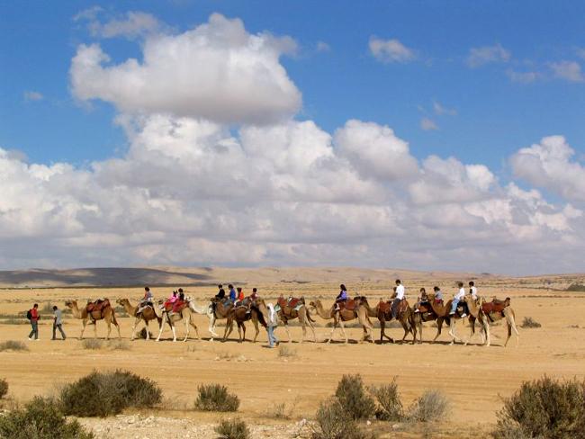 Израиль - сафари на верблюдах по пустыне - экскурсия