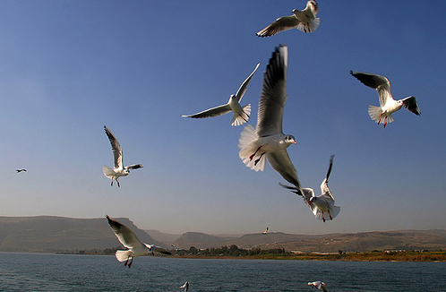 Израиль - озеро Кинерет - фото