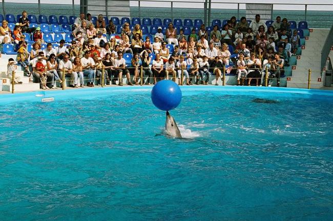 Дельфинарий в Одессе - фото