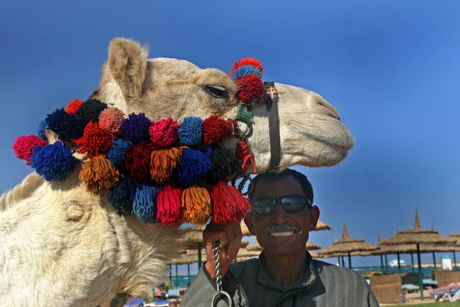 Верблюд на пляже в Хургаде