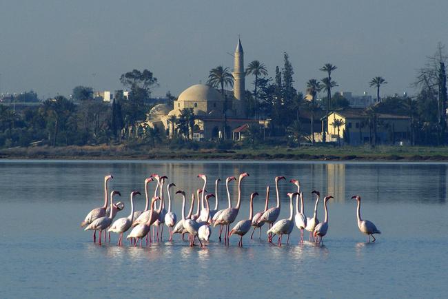 Кипр - Ларнака - фламинго
