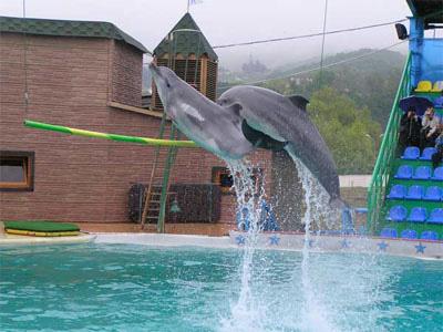Дельфинарий в Адлере - фото