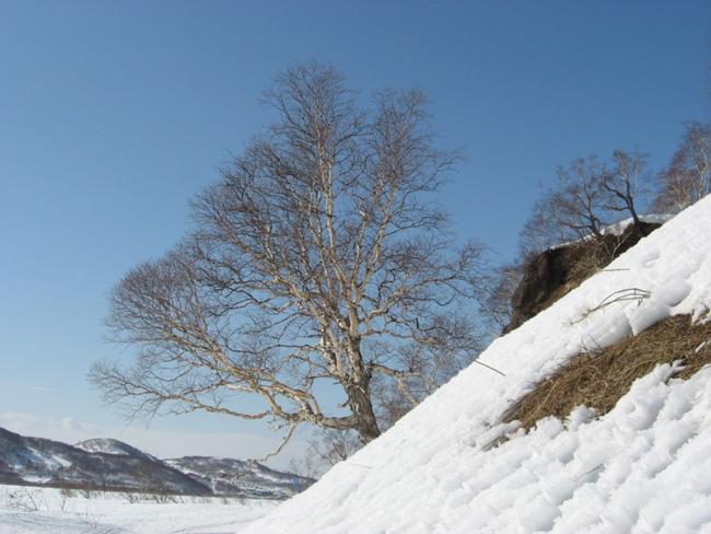 Природа Камчатки - фото