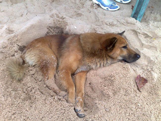 На пляже Паттайи всем жарко..