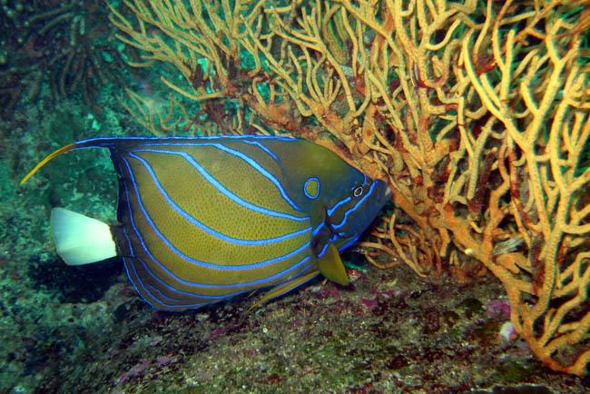 Подводный мир рыбы крабы черепахи