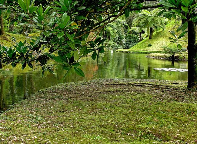Азорские острова - природа