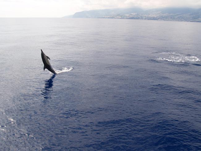 Портимау - дельфин - фото