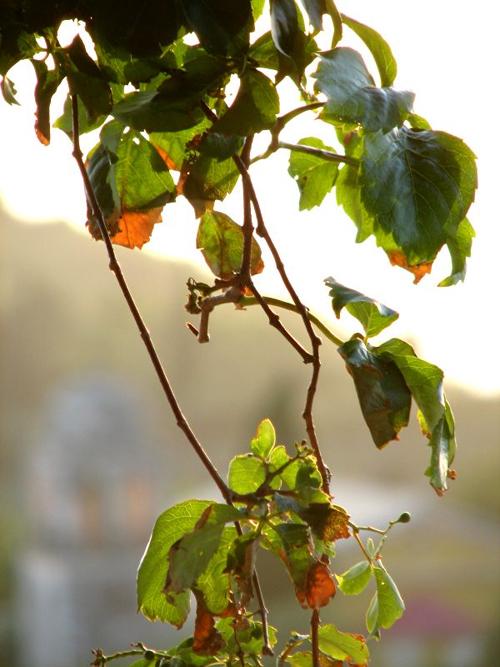 Остров Закинзос, растения, фото