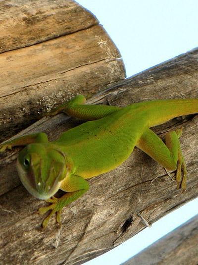 Куба - фауна - фото