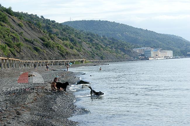 Пляжи - купание с собаками - фото