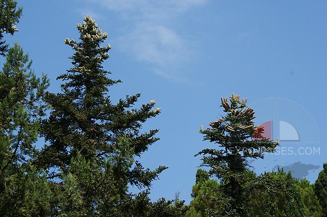 Парк - реликтовые деревья - Семидворье