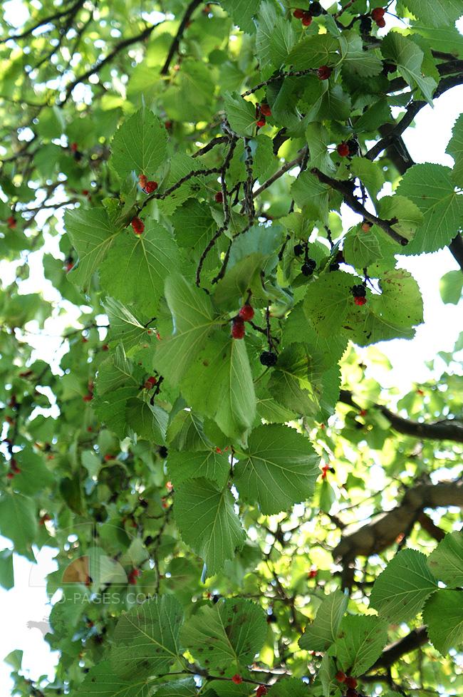 Семидворье - парк - природа - деревья