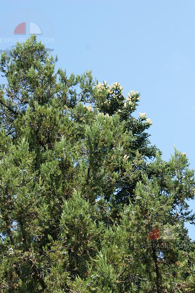 Какие в Семидворье деревья в парке