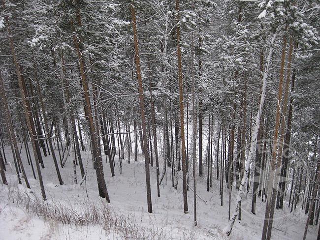 Катание на лыжах - трассы - фото
