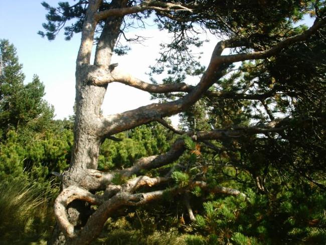Национальный парк Витоша, фото
